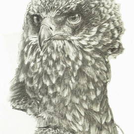 African Crowned Eagle Portrait by Barbara Keith