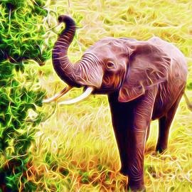 African Elephant by Jerome Stumphauzer
