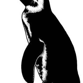 African penguin - ink illustration by Loren Dowding