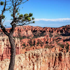 Afternoon Shadows at Bryce by Phyllis Peterson