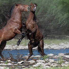 Afternoon Stallion Spat. by Paul Martin