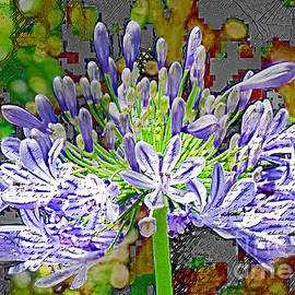 Agapanthus Revsited by Trudee Hunter
