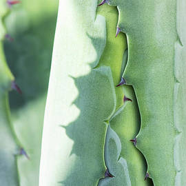Agave Foliage Opening by Tim Gainey