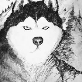 Alaskan Husky by Robert Martin