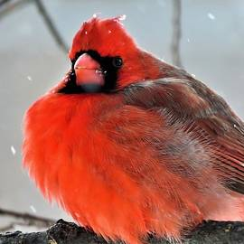 All Puffed Up  by Lori Frisch