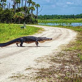 Alligator Crossing by Felix Lai