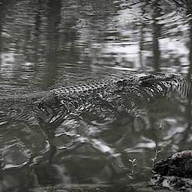 Alligator Louisiana Swamps Black White by Chuck Kuhn