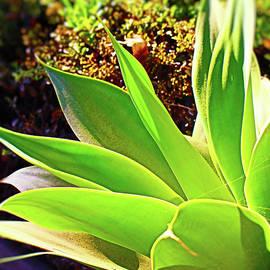 Aloe Vera Portrait by Loretta S