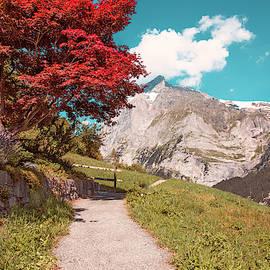 Amazing red Autumn tree in Grindelwald, Switzerland by Masha Lince