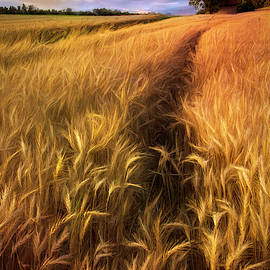 Amber Waves Of Grain Blowing In The Wind by Debra and Dave Vanderlaan