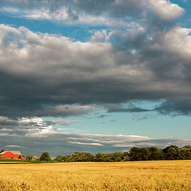 Amber Waves of Grain by Ginger Stein