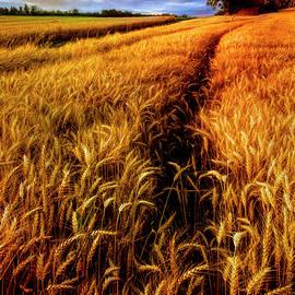 Amber Waves of Grain Painting  by Debra and Dave Vanderlaan