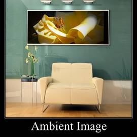 Ambient Images Art Group  by Delynn Addams