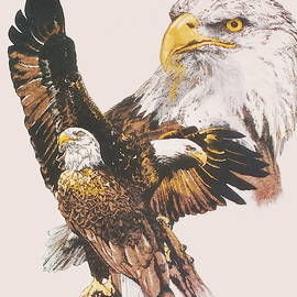 Our National Symbol by Barbara Keith