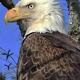 American Eagle on the Rainbow by Jack Cushman