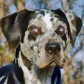Americcan Leopard Hound - Jax by Laurence Canter