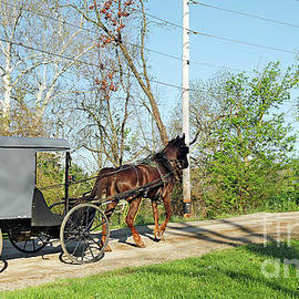 Amish Traffic Western Indiana by Steve Gass