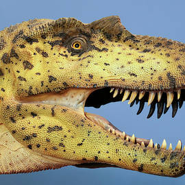 An Albertosaurus Exhibit at The Nat, San Diego, CA, USA by Derrick Neill