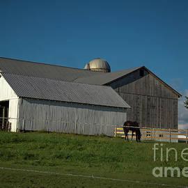 An Amish Barn by Janice Pariza