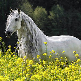 Andalusian In Yellow by Wes and Dotty Weber