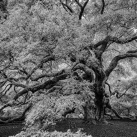 Angel Oak Tree Black And White by Rick Berk