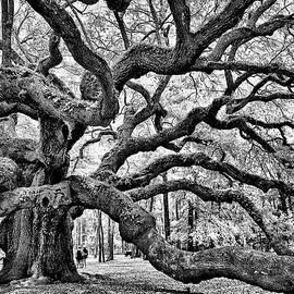 Angel Oak Tree by Louis Dallara