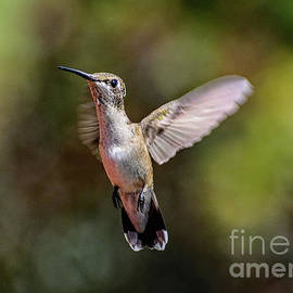 Angelic Juvenile Male Ruby-throated Hummingbird by Cindy Treger