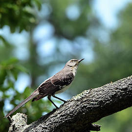 Angular Mockingbird by William Tasker