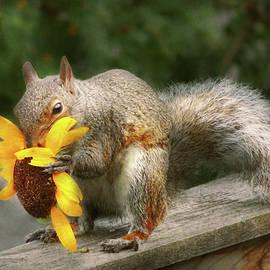Animal - Squirrel - Summer treats by Mike Savad
