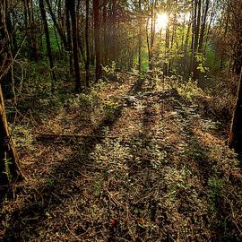 Appalachia Morning by Scott Cordell