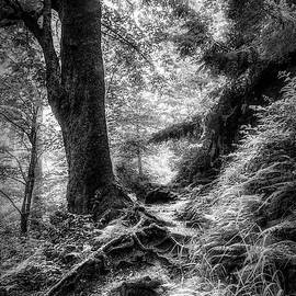 Appalachian Trail In Black And White  by Debra and Dave Vanderlaan
