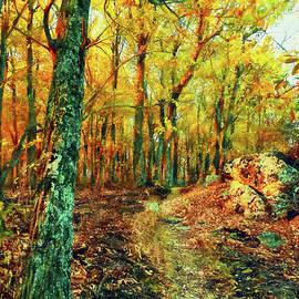 Appalachian Trail Sunrise AP by Dan Carmichael
