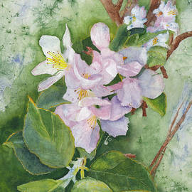 Apple Blossoms in Spring Watercolor by Conni Schaftenaar