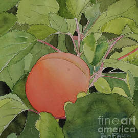 Apricot In Situ by Ralph F Wilson