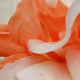 Apricot Ruffles by Kathy Barney