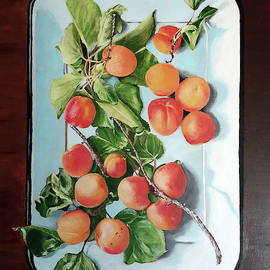 Apricots by Marilyn Hilliard