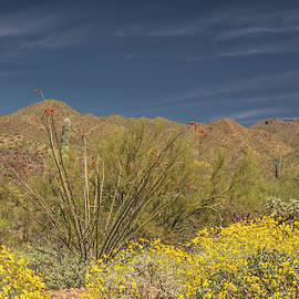 Arizona-sonora Desert 6522-040719 by Tam Ryan
