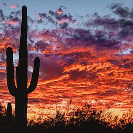 Arizona Sunset by Chance Kafka
