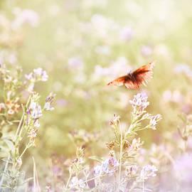 Around The Meadow 11 by Jaroslav Buna