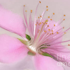 Art of a Pink Blossom by Kaye Menner by Kaye Menner