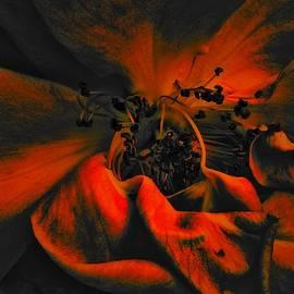 Art of the Burning Rose 2 by Jeremy Lyman