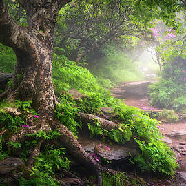 Asheville North Carolina Appalachian Mountains Hiking Trail Scenic Landscape by Dave Allen