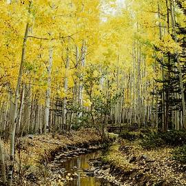 Aspen Fall And Stream by Paul - Phyllis Stuart