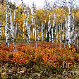 Telluride Oak Brush by Norma Brandsberg