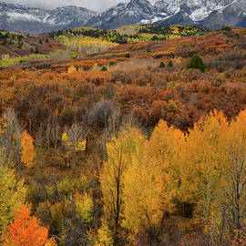 Aspen Grove In Full Color At Dallas Divide by Ray Mathis