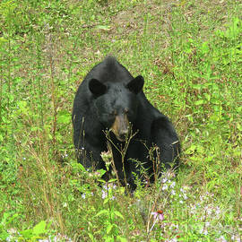 August Bear 6 by Amy E Fraser