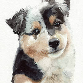 Australian Shephed Puppy by Emily Olson