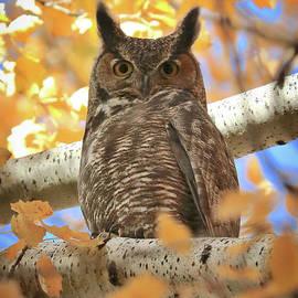 Autumn Afternoon Owl by Carol Groenen