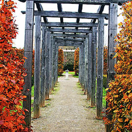Debbie Oppermann - Autumn Arbor