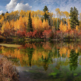 Autumn at its Best by Leland D Howard